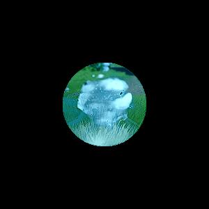 Цветы озарения - Genshin Impact - Гайд