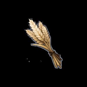 Пшеница - Genshin Impact - Гайд по игре